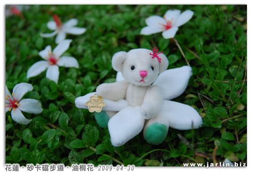 20090429_油桐花小熊