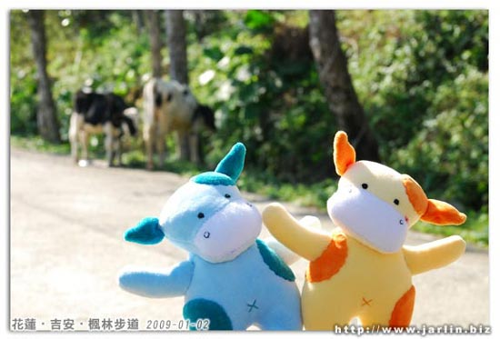 20090101_乳牛北鼻_小芒果 & 小水滴