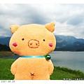 20070530_哈密豬