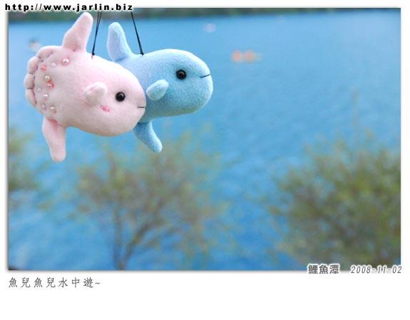 20081028_曼波魚