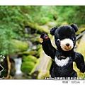 20080830_台灣小黑熊(Jarlin品牌八週年紀念熊)