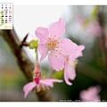 03月_1_林口‧竹林寺櫻花
