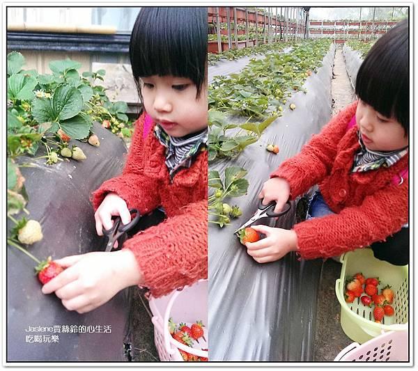我們這一家採草莓趣6