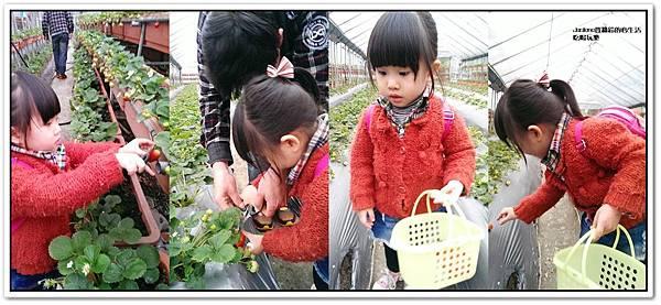 我們這一家採草莓趣7