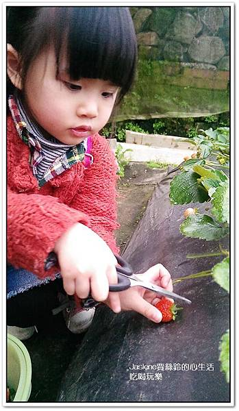 我們這一家採草莓趣9