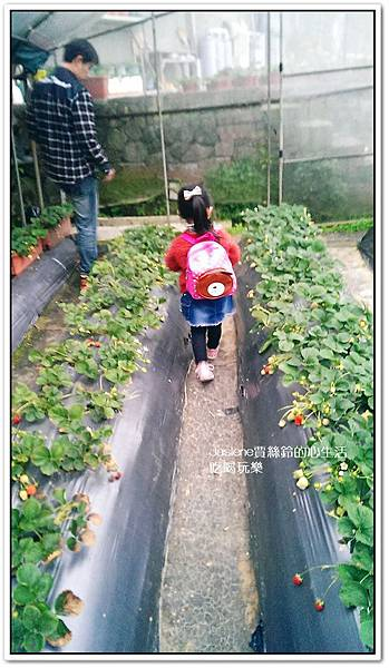 我們這一家採草莓趣8