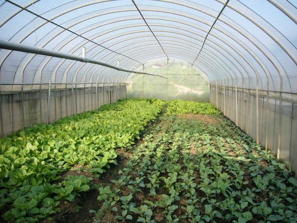 20070707臨海農場與4個孩子的家4.JPG