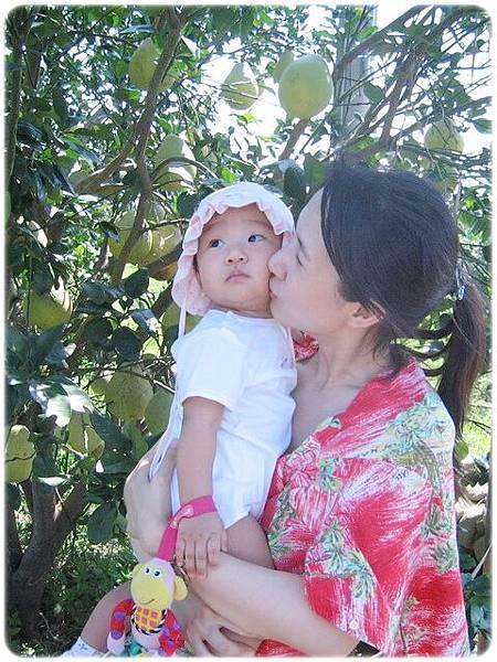 10M13D_02陳漢欽叔叔的柚子園.jpg