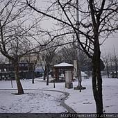 枯樹映著白雪