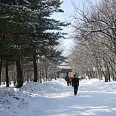 被雪鋪滿的路