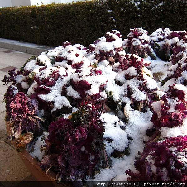 雪都壓滿小樹的頭了
