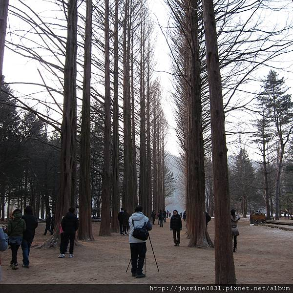 又是高高的林間小徑