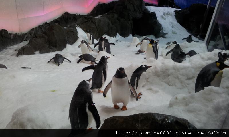 搖搖擺擺的企鵝們