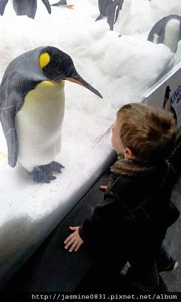國王企鵝vs.古錐小孩