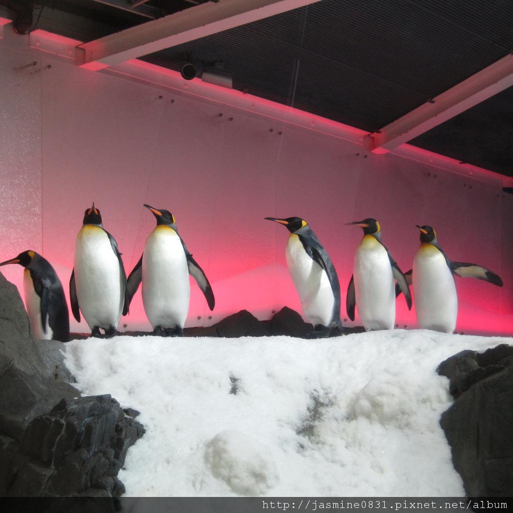 排排隊的企鵝