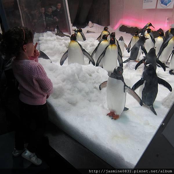 小女孩vs.企鵝