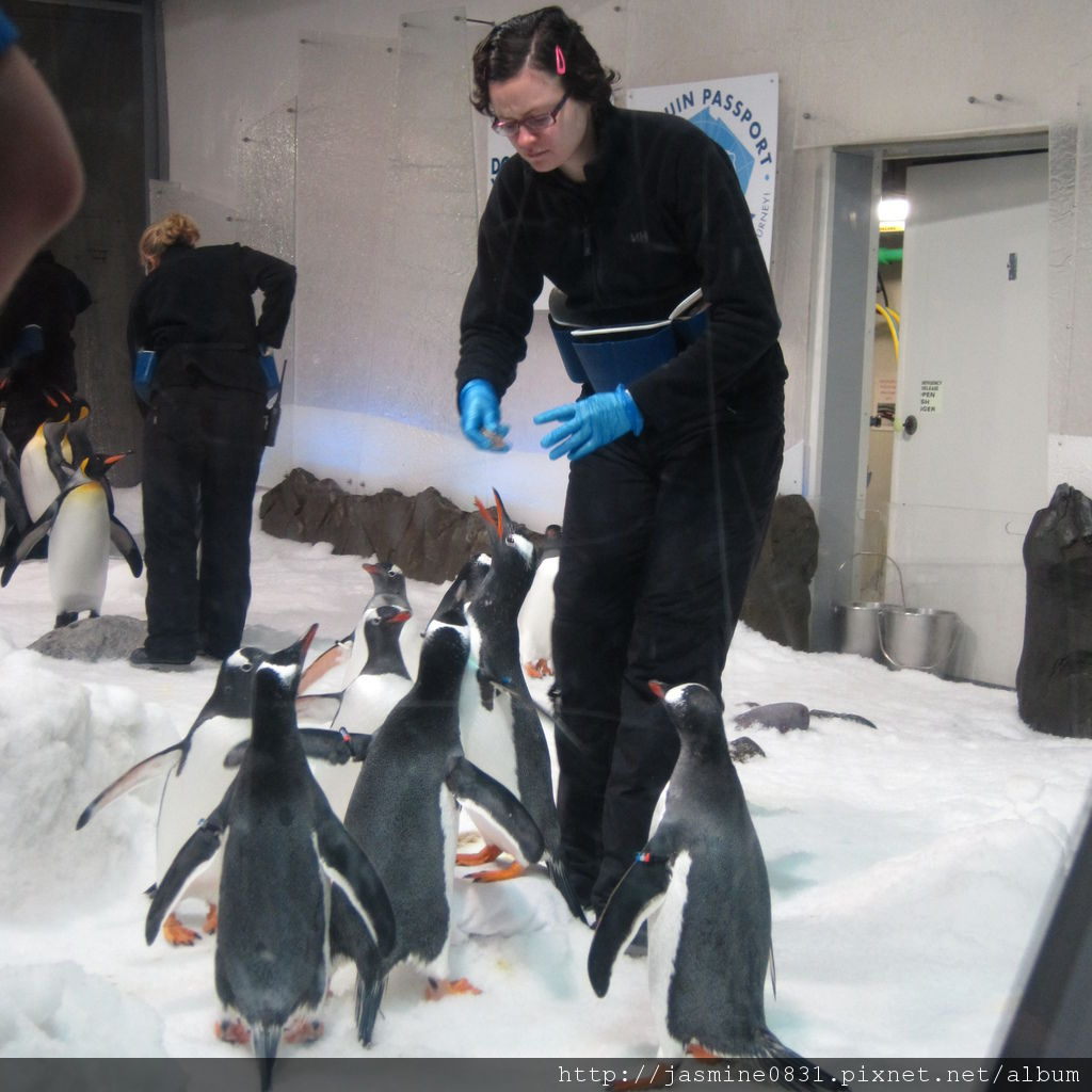 企鵝放飯囉