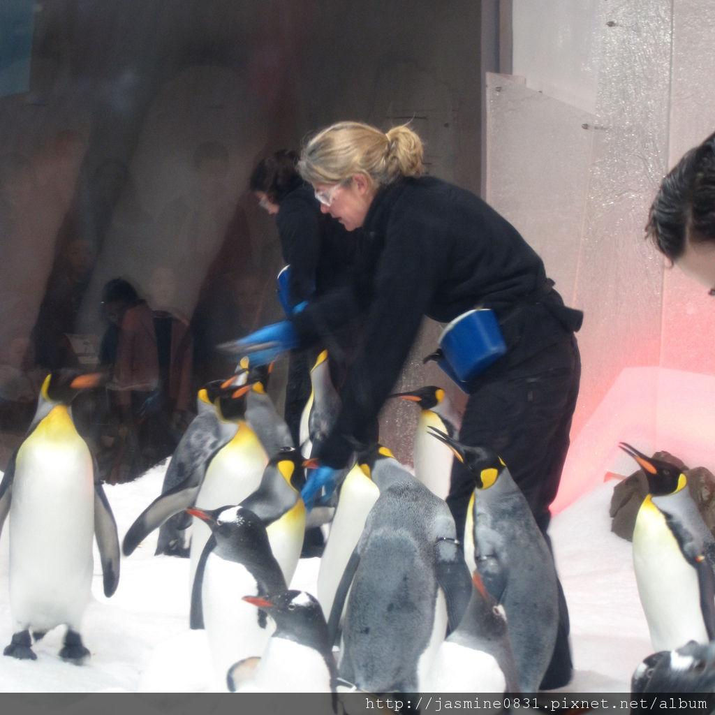 國王企鵝組