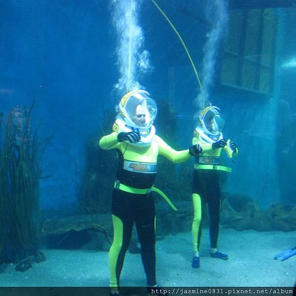 體驗與鯊魚共遊的人