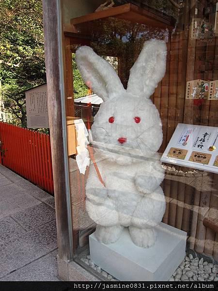 地主神社內的小兔