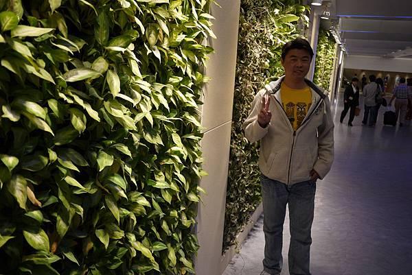 馬力歐與綠化走廊