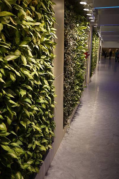 一航廈的綠化走廊
