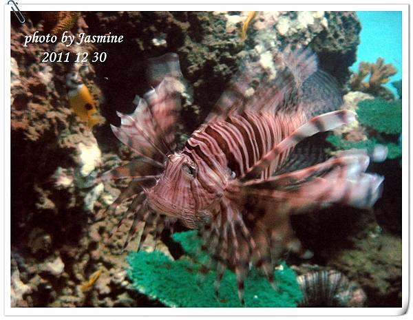 2011海洋公園 (109).jpg