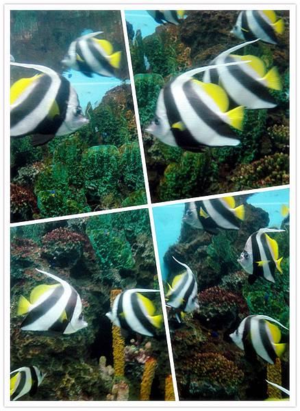 2011海洋公園 (118).jpg
