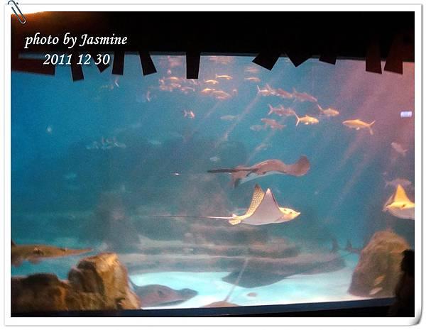 2011海洋公園 (122).jpg
