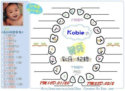 Kobie發芽紀錄.jpg