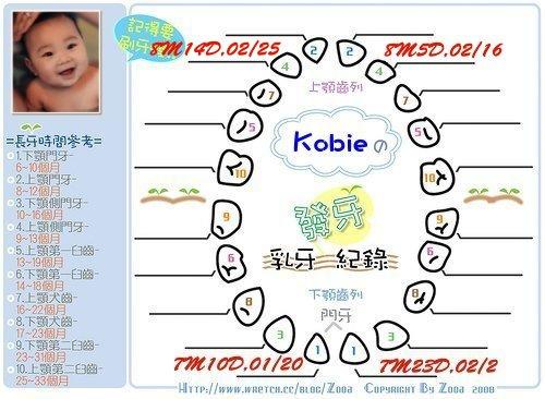 Kobie發芽紀錄第四顆.jpg