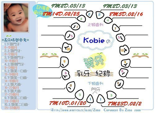 Kobie發芽紀錄第五,顆.jpg