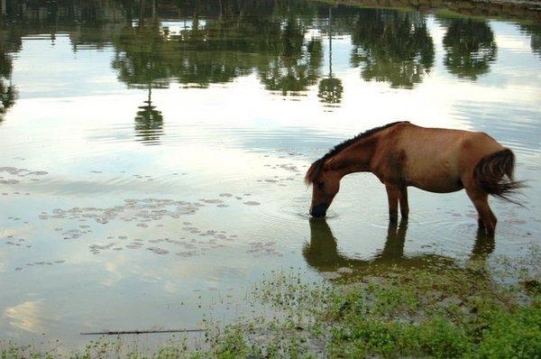 早起的馬兒有水喝