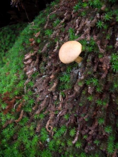 小香菇(有點小模糊)