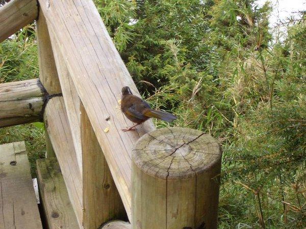 休息區的鳥兒