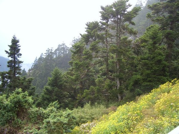 排雲山莊的環境很好