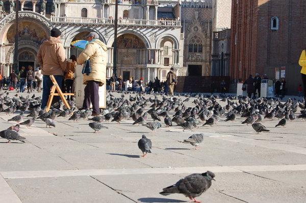 禽流感就是這麼來的.jpg