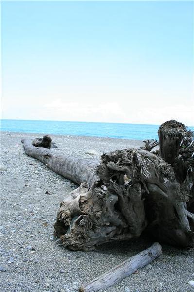 海岸有許多巨木