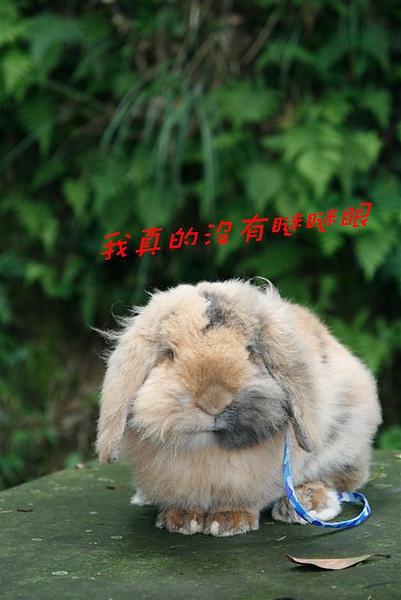A_MG_6460.jpg