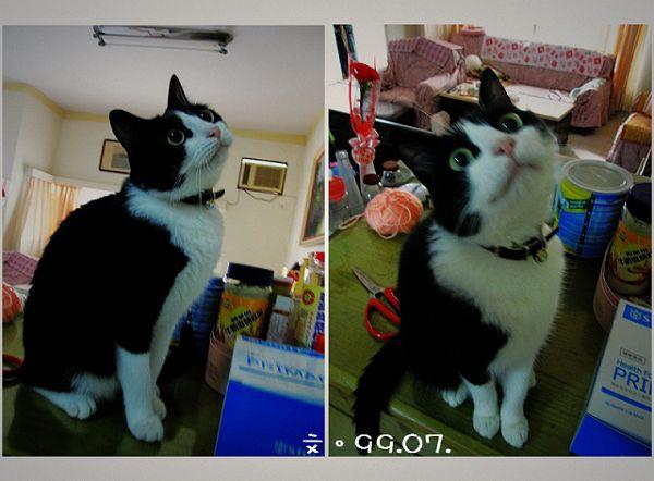 meow1.jpg