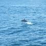 賞鯨-15