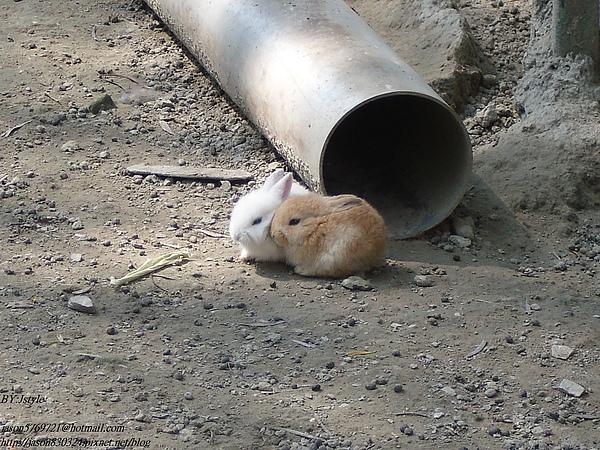 兩隻小兔子.JPG