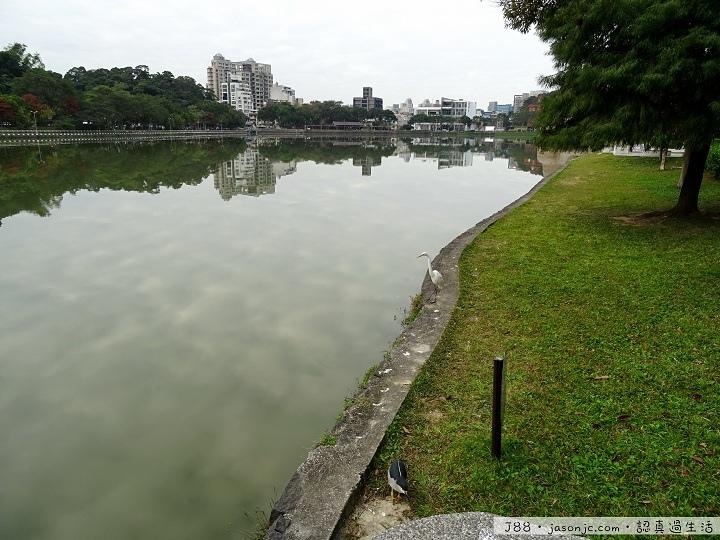 夜鷺捕食琵琶鼠魚@碧湖公園 | 台北市內湖區