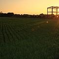 稻地的昏陽