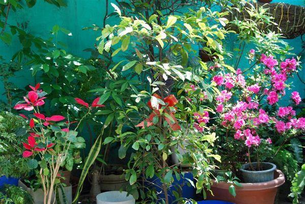我家花園1.jpg
