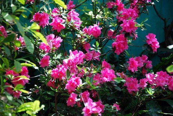我家花園2.jpg