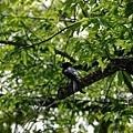 樹枝孤鳥.jpg