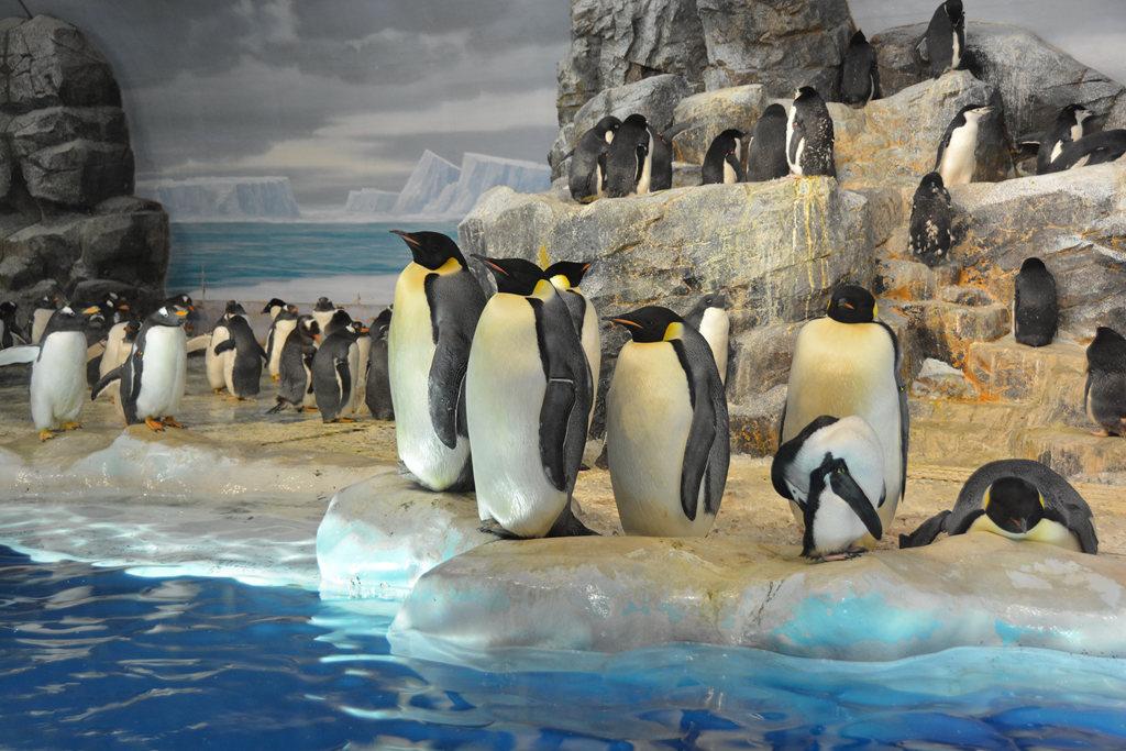 南極企鵝 (1).JPG