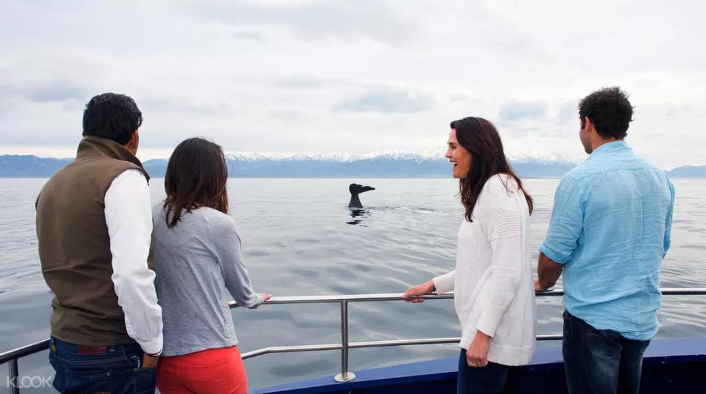 凱庫拉觀鯨.png