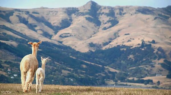 莎瑪拉羊駝牧場遊.png